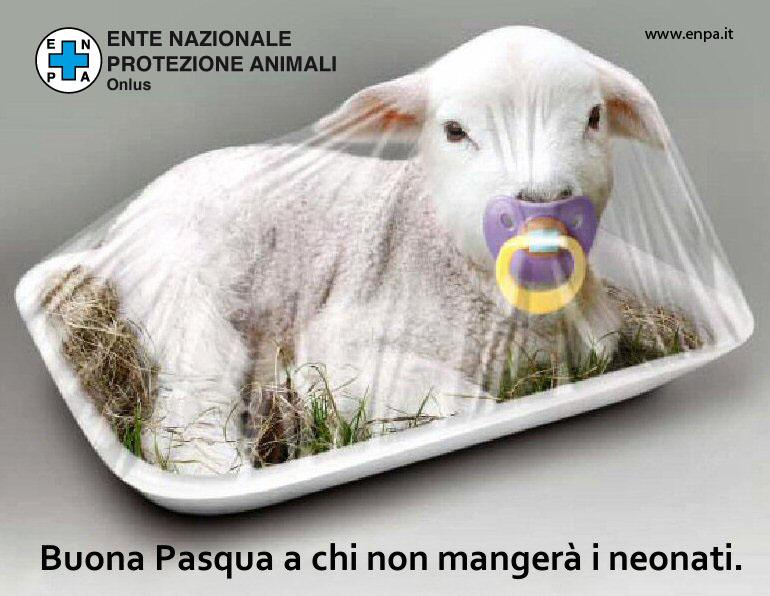 agnello-protezione-animali