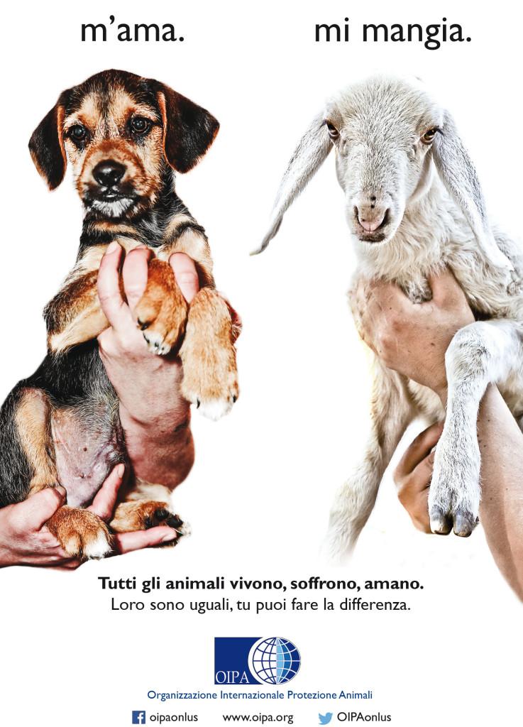 cane-pasqua-agnello