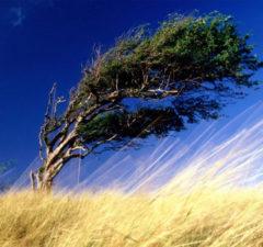 titoli delle canzoni dedicate al vento